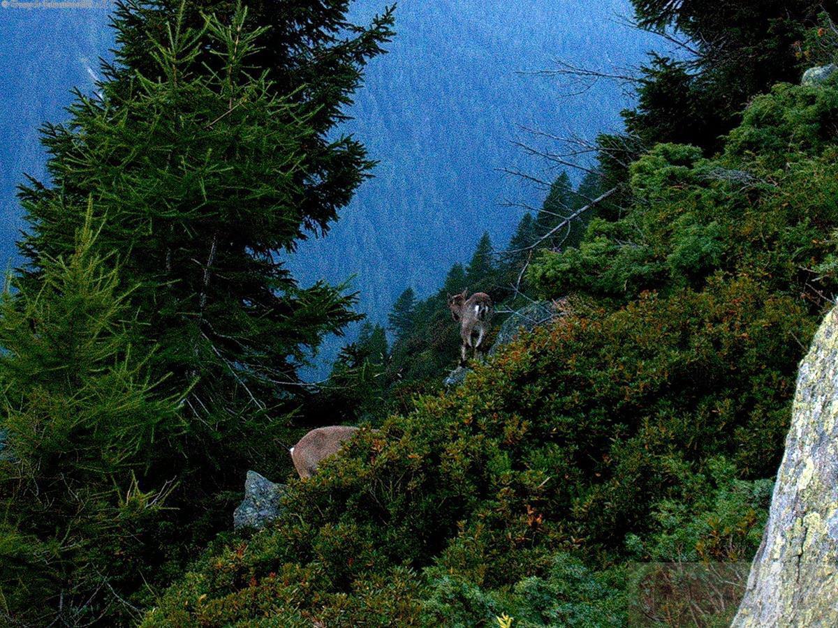 Grzegorz Jakubowski - Alps Chamonix